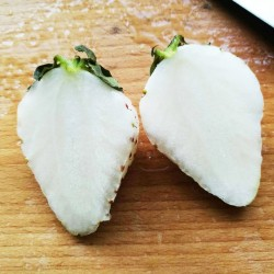 Άσπρη Φράουλα! 15 σπόροι