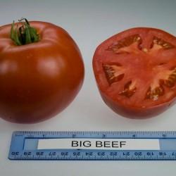 Ντομάτα Black Beefstake 250γρ Φρούτο - 15 Σπόροι