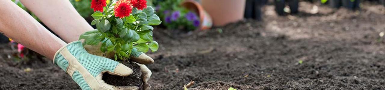 Οδηγίες Καλλιέργειας - Άρθρα - Διαγωνισμοί Flowerstore.gr