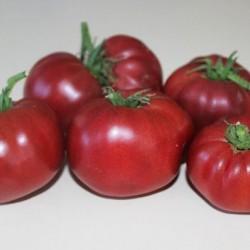 Ντομάτα Bononia 1γρ. Σπόροι ~ Επιλογή Flowerstore.gr