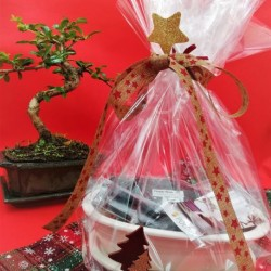Bonsai Christmas Gift Set!