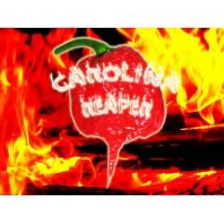 Carolina Reaper/Καρολινα Ριπερ 6 σπόροι / Η πιο καυτερή πιπεριά στον Κόσμο / χάρος Καρολίνας!