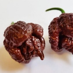 Carolina Reaper/Καρολινα Ριπερ Σοκολατί! 6 σπόροι Ίσως η πιο καυτερή πιπεριά στον Κόσμο!
