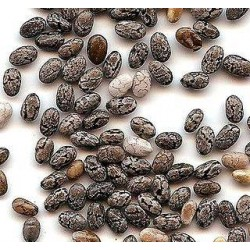 Chia/Τσία/Κία (Salvia Hispanica) 40+ σπόροι