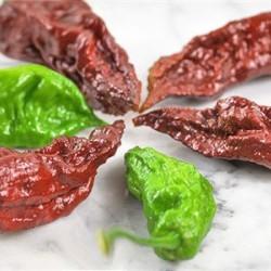 Σοκολατί Καυτερή Πιπεριά Bhut Jolokia - 5 Σπόροι