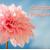 ΔΙΑΓΩΝΙΣΜΟΣ ΑΠΡΙΛΙΟΥ FLOWERSTORE.GR! ΔΩΡΕΑΝ ΠΑΚΕΤΑ ΣΠΟΡΩΝ ΚΑΙ ΒΟΛΒΩΝ!