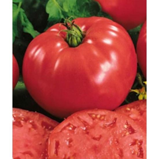 Ντομάτα Favorit Καρποί Μεγέθους 400γρ. - 15 Σπόροι