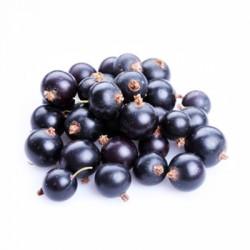 Φραγκοστάφυλο (Blackcurrant) φυτό - γλάστρα 50 εκ.
