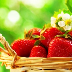 Κόκκινη Φράουλα 4 Εποχές (4 Seasons) 20 Σπόροι!