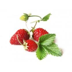 Κόκκινη Φράουλα Αlpine Regina 20 Σπόροι!