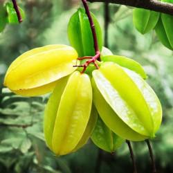 Φρούτο-αστέρι (καραμπόλα), 10 σπόροι