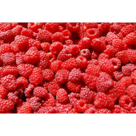 Κόκκινο Σμέουρο γίγας / Giant Raspberry  (Rubus Idaeus) 15 Σπόροι