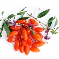 Γκότζι Μπέρι, Goji berry, wolfberry, 30 Σπόροι