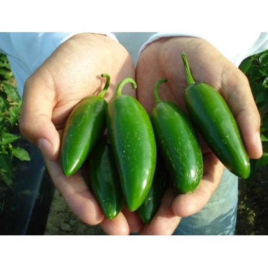 Καυτερή Πιπεριά Jalapeno 15 Σπόροι