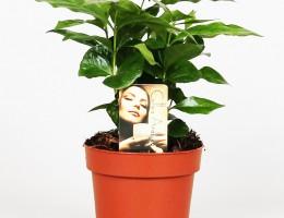 Έτοιμα Φυτά