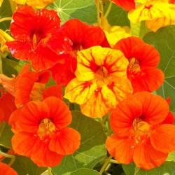 Μίγμα Αναρριχώμενων φυτών 2γρ Σπόροι