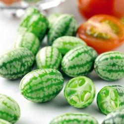 Κουκαμέλον, (cucamelon) 15 σπόροι