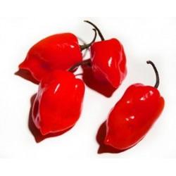 Κόκκινη Χαμπανέρο (Habanero) Καυτερή πιπεριά 10 σπόροι!