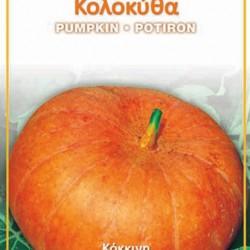 Κολοκύθα (curcubita maxima duchesne) Σπόροι 4,50γρ