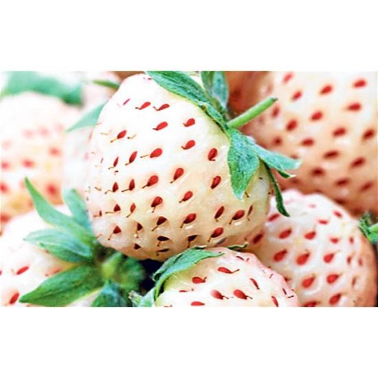 Λευκή Φράουλα Pineberry - 2 Ριζώματα (flowerstore.gr exclusive)
