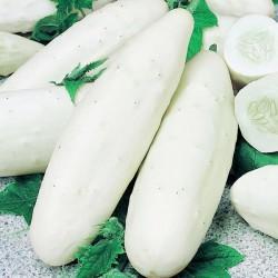Σπόροι Λευκού Αγγουριού White Wonder 4γρ