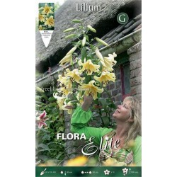 Λίλιουμ Treelilies Honeymoon - 1 Βολβός
