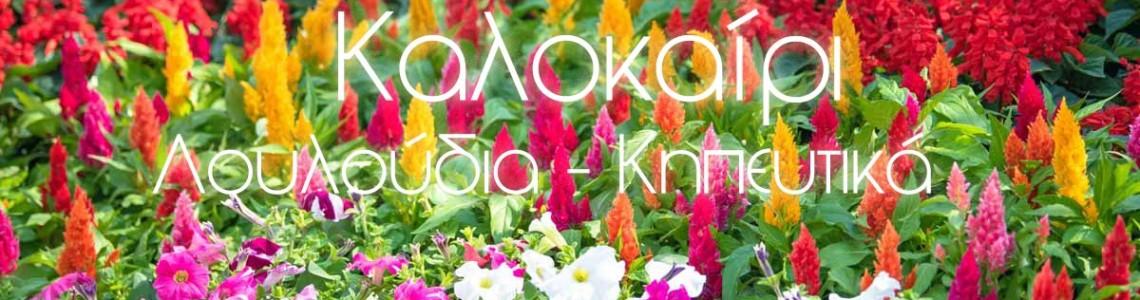 Τι Λουλούδια να Φυτέψω το Καλοκαίρι?