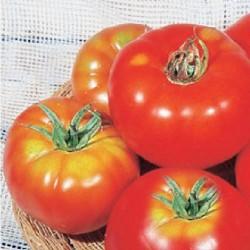 Ντομάτα Marmade αναρριχόμενη 1,5γρ Σπόροι