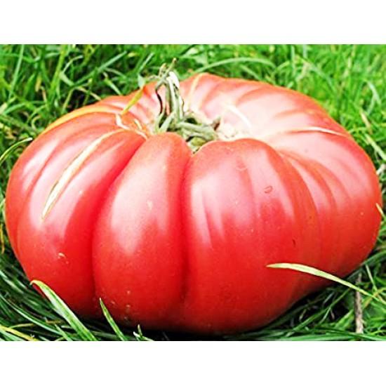 Ντομάτα Monster Πελώριοι Καρποί 1400γρ! 10 Οργανικοί Σπόροι