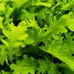 Μουστάρδα Wasabina Πικάντικη Γεύση Wasabi 20 Σπόροι