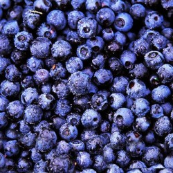 Μύρτιλο (blueberry) 20 σπόροι μύρτιλου