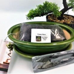 Bonsai Starter Gift Set!
