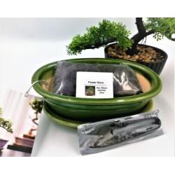 Bonsai Starter Gift Set!