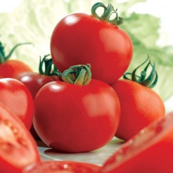 Ντομάτα Alisa Craig 20 σπόροι