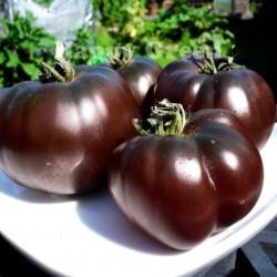 Ντομάτα Μαύρη Black Prince - 15 σπόροι