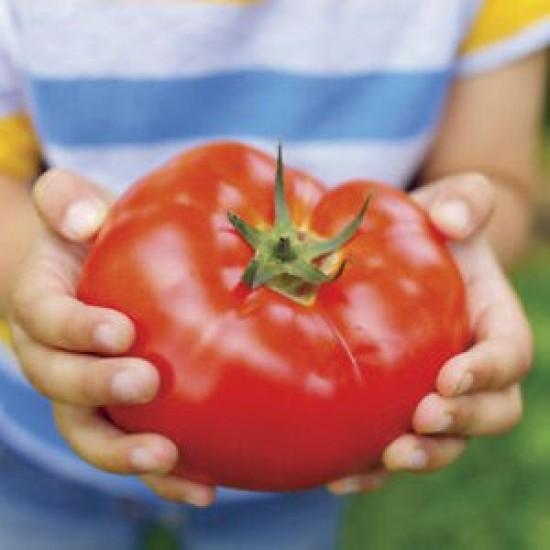 Ντομάτα Γίγαντας Παραδοσιακή Βουλγαρίας - 0,5γρ σπόροι