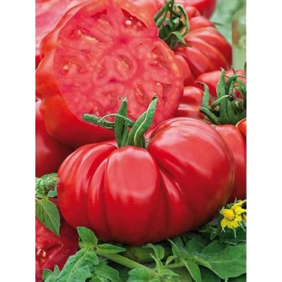 """Ντομάτα Τεράστια Παραδοσιακή ποικιλία """"Brutus"""" - 10 σπόροι"""