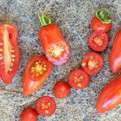 Ντομάτα Sweet Casaday - 10 σπόροι