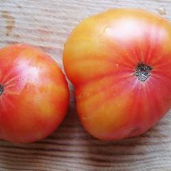 Ντομάτα Παραδοσιακή beefstake Hillbilly 20 σπόροι