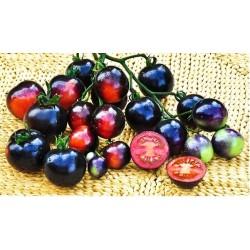 Ντομάτα Μικρή Indigo Rose 10 Σπόροι