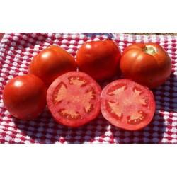 Ντομάτα Sub Artic Plenty για χαμηλότερες θερμοκρασίες 10 σπόροι