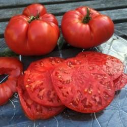 Ντομάτα Big Daddy f1 (ο μεγάλος μπαμπάς) 10 σπόροι