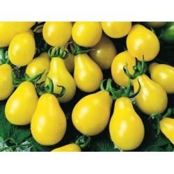 Ντομάτα Κίτρινη (Yellow Pear/Cherry Bell) 30 Σπόροι