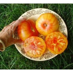 Οργανική Παραδοσιακή Ντομάτα μεγάλη Pineapple 25 σπόροι