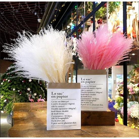 Γυνέριο - Φυτό Με Ροζ Φτερά - 20 Σπόροι