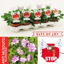 Αρμπαρόριζα φυτό – Ένα φυσικό αντι-κουνουπικό στο μπαλκόνι σας!