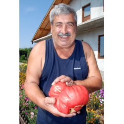Πελώρια Παραδοσιακή Ροζ Ντομάτα Βουλγαρίας 1,5kg  - 10 Σπόροι
