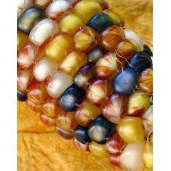 Πολύχρωμο Καλαμπόκι! Πακέτο σπόρων 4γρ. Σπόροι Καλαμποκιού