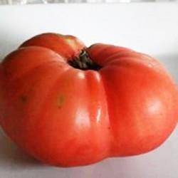 Ντομάτα Ponderosa Μεγάλες Ντομάτες 500 γρ. - 15 σπόροι
