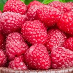 Raspberry | Κόκκινο Μούρο / Σμέουρο -1 Φυτό (50εκ.)